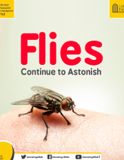 Flies Continue to Astonish