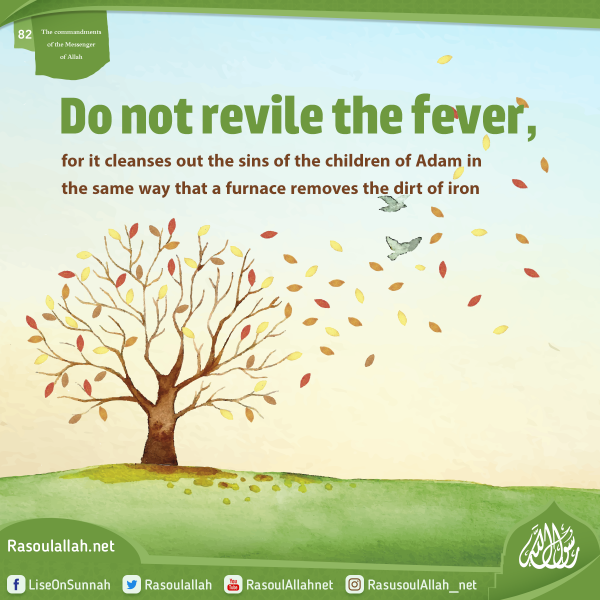 Do not revile the fever, for it cleanses out the sins of the children of Adam in the same way that a furnace removes the dirt of iron